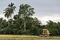 Langkawi Malaysia Rice-Harvesting-09.jpg