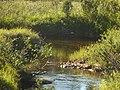 Lapland - Urho Kekkonen National Park - 20180728172335.jpg