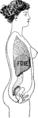 Le Corset de Toilette - 42 Fig2.png