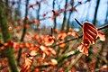 Leaves In Winter (245755349).jpeg