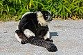 Lemur (23647831898).jpg