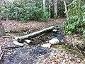 Len foote hike inn trail amicalola falls ga - panoramio (4).jpg