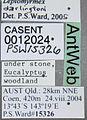 Leptomyrmex darlingtoni casent0012024 label 1.jpg