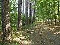 Lesom - panoramio (2).jpg
