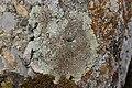 Lichen (44221489001).jpg