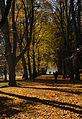 Lindenallee-Rombergpark-Herbs-2015.jpg