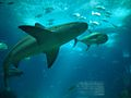 Lisbon Oceanarium (14217033427).jpg