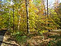 Loantaka Way NJ bike trail with woods and leaves and brush early autumn.JPG