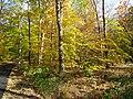 Loantaka Way NJ bike trail with woods and leaves and brush early autumn.JPG