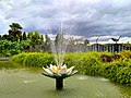 Lotus in front of Bangabandhu Sheikh Mujib Safari Park.jpg