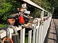 Love-locks in Kharkov.JPG