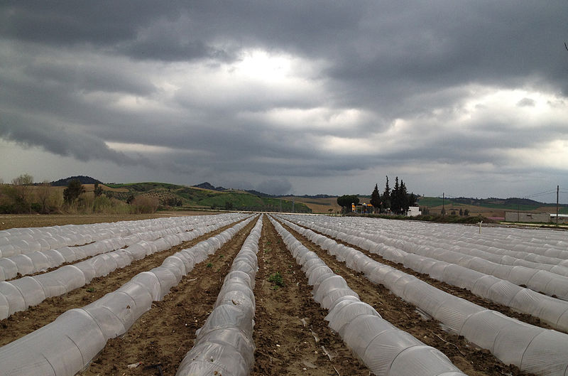 File:Low tunnels for vegetable production 02.jpg