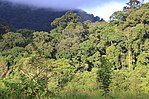 Lowland forest in Mt. Leuser NP (8187201955).jpg