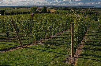 Canadian wine - Image: Luckett Vineyards Gaspereau Valley Nova Scotia