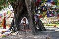 Lumbini-14-Bodhi-Baum-2013-gje.jpg