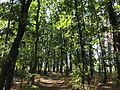 Lunjevac, Lunjevačka šuma, 02.jpg