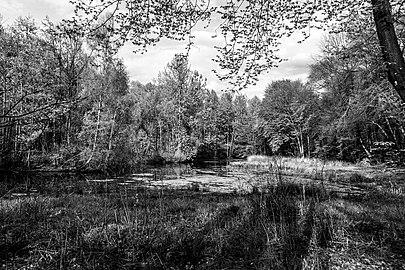 Münster, Wolbeck, Wolbecker Tiergarten, Naturwaldzelle -Teppes Viertel- -- 2014 -- 7084-2.jpg