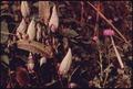 MARSHLANDS IN THE CUYAHOGA VALLEY PRODUCE ABUNDANT MILKWEED (ASCLEPIAS SYRIACA) AND BULL THISTLE (CIRSIUM VULGARE)... - NARA - 558079.tif