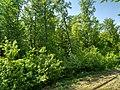 MD.ED.Zăbriceni - rezervația peisagistică Zăbriceni - apr 2018 - 07.jpg