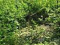 MD.RS - rezervația naturală silvică Stînca - apr 2018 - 05.jpg