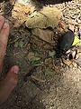 Madre de la Culebra 5.jpg