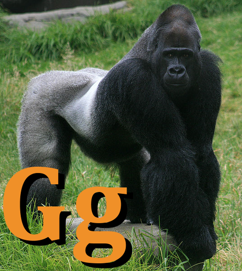 Male gorilla in SF zoo-G.png