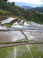 Maligcong rice terraces (3300126184).jpg