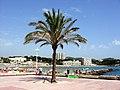 Mallorca Peguera - panoramio (3).jpg