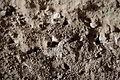 Malta - Birzebbuga - Triq Ghar Dalam - Ghar Dalam - cave - earth bees 02 ies.jpg