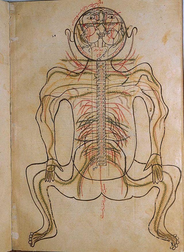 الطب والصيدلة في عصر الحضارة الإسلامية Wikiwand