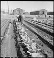 """Manzanar Relocation Center, Manzanar, California. Evacuee in her """"hobby garden"""" which rates highest . . . - NARA - 537976.jpg"""