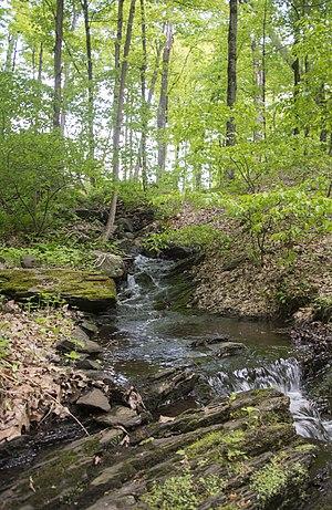 Maritje Kill - A tributary of the Maritje Kill