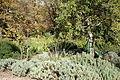 McConnell Arboretum & Botanical Gardens - Redding, California - DSC03015.JPG