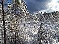 Mežoles dabas liegums 14 marts 2020.jpg