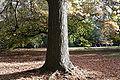 Melb botanical gardens02.jpg