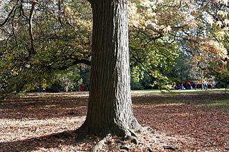 Royal Botanic Gardens Victoria - Autumn at the gardens.