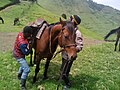 Men land horses in Goma DRC.jpg