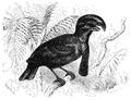 Menniskans härledning och könsurvalet illustration sida II-43.png