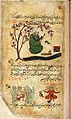 Mercury, sitting reading a book under a tree in bloom with Wellcome L0030662.jpg