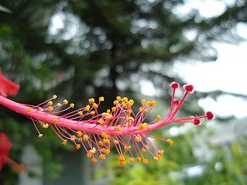 Microbeauty of nature.jpg