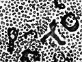 Microcystis aeruginosa 680.jpg