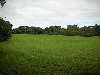 Delaware - A field north of Fox Den Rd., along the Lenape Trail in Middle Run Valley Natural Area.