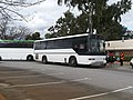 Midland Bus Company Mercedes-Benz O305 (PMCA 160) CVL2504 @ Ern Clark Athletic Track,Cannington.jpg