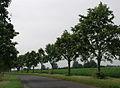 Mill Lane Kilpin 1.jpg