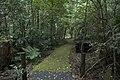 Minnamurra Rainforest - panoramio (2).jpg