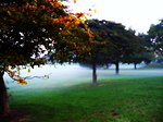 Mitchell park fog - milwaukee.jpg