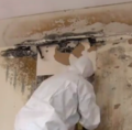 Mold Remediation.png