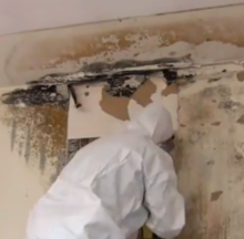 Worker In Protective Clothing Removing Mold From A Wall