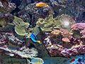 Monaco.Musée océanographique057.jpg