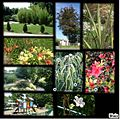 Montage jardin 2.jpg